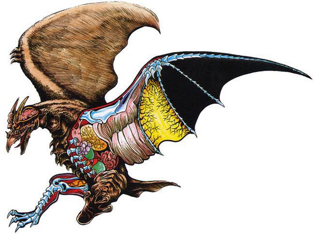 File:Rodan anatomy.png