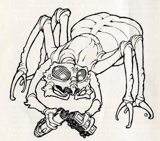 File:Arachnis ccc.jpg