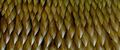 GMK - King Ghidorah Skin