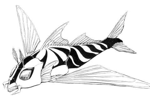 File:Concept Art - Rebirth of Mothra 2 - Aqua Mothra 13.png