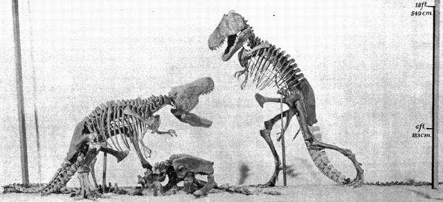 File:Amnh rex model.png
