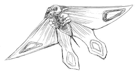 File:Concept Art - Rebirth of Mothra 2 - Aqua Mothra 4.png