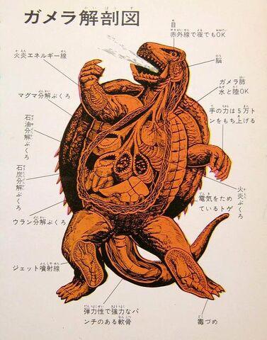 File:Anatomy of Gamera.jpg