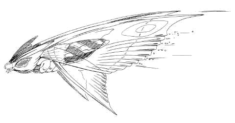 File:Concept Art - Rebirth of Mothra 2 - Aqua Mothra 11.png