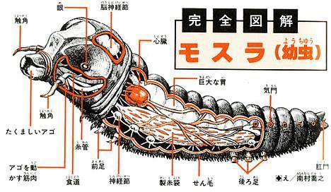 File:Biology of Mothra.jpg