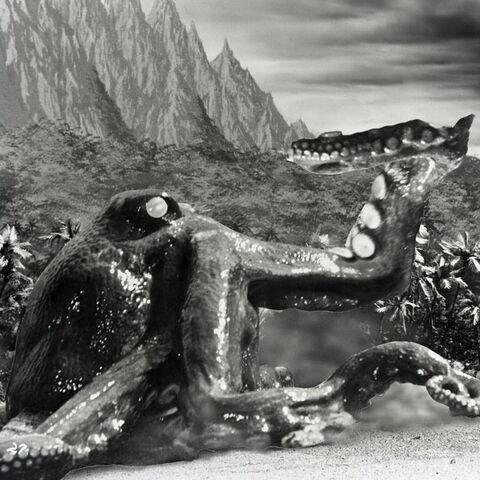 File:Giant Octopus 0.jpg