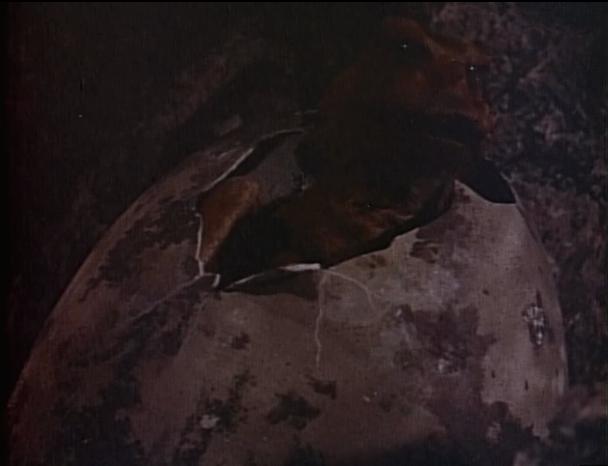 File:Rodan 1956 - Rodan's egg hatched.png