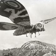 Godzilla.jp - 4 - ShodaiMosuImago Mothra 1964.jpg