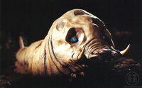 Leo (Larva).jpg