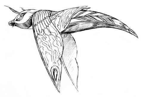 File:Concept Art - Rebirth of Mothra 2 - Aqua Mothra 2.png