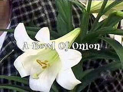 A Bowl Of Onion