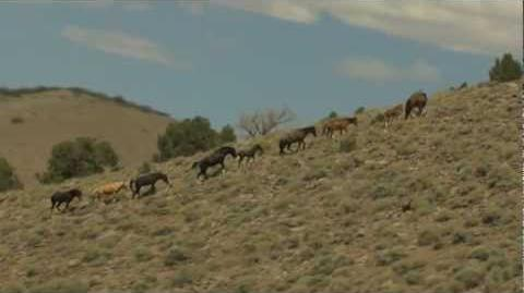 Wild Mustang Horses Running Free on a Mountainside Aerial Video View taken from a Helicopter Flyby-0