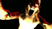 Wolf2 72