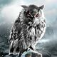 Northern Owl