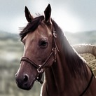 Dothraki Horse