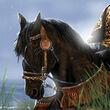 Bronn's Dornish Steed