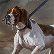 Tracking Hound