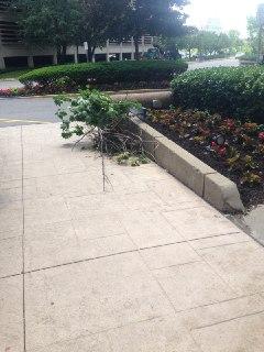 Small Fallen Tree Nga Sai