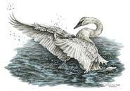 White-swan--dreams-take-flight-tinted-kelli-swan