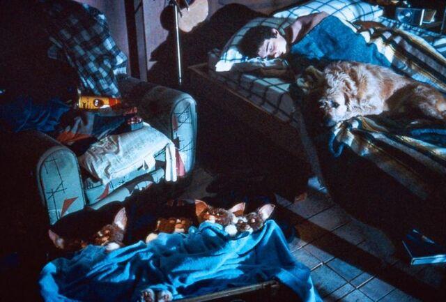 File:Gremlins scene 08.jpg