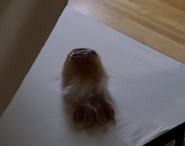 414-Nick finds Petter Bennett's foot under the Spinellis' bed