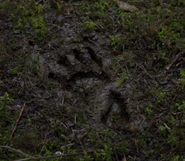 419-Löwen footprint