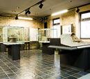 Museo civico archeologico Isidoro Falchi