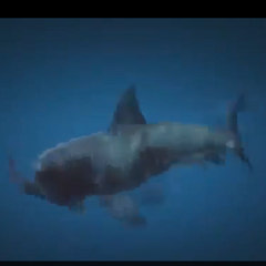 A shark eating Trevor in GTA V.