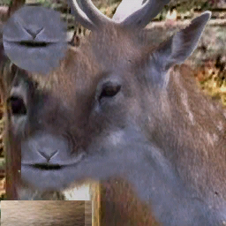 File:CJ Deer1.png