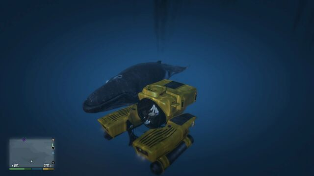 File:KrakenGTAVe Meets Whale.jpg