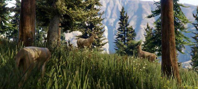 File:Deer-GTAV-nextgen.jpg