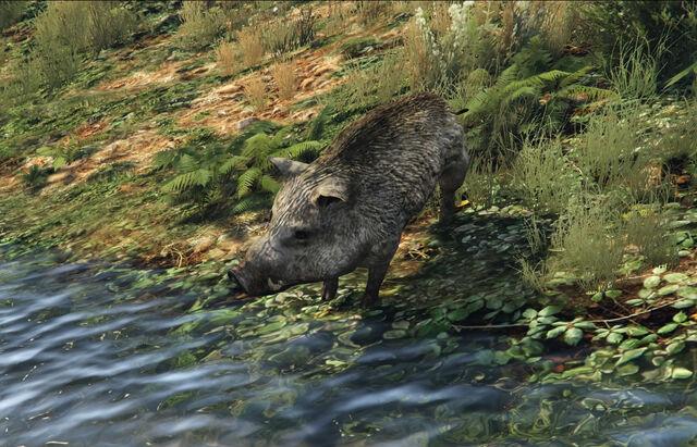 File:Grand Theft Auto V Boar.jpg