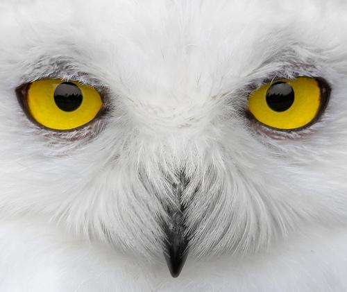 File:Look into my eyes.....jpg