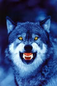 File:Vyrrwolf.jpg