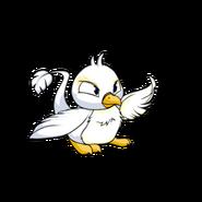 Pteri white