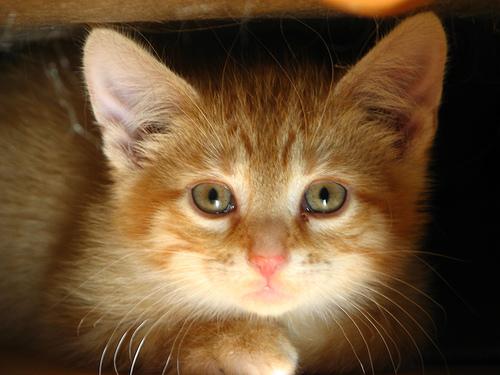 File:Sage's Kittens.jpg