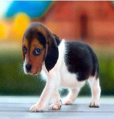 File:John the Dog.png