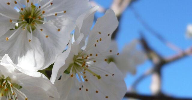 File:Flowers cropped.jpg