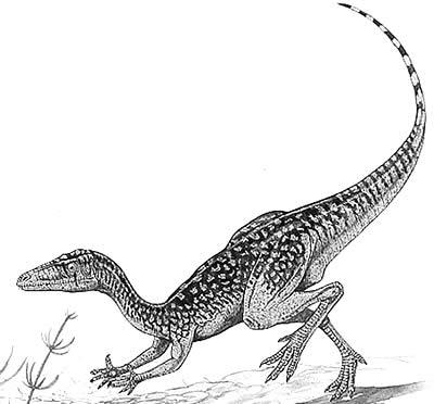 File:Procompsognathus.jpg