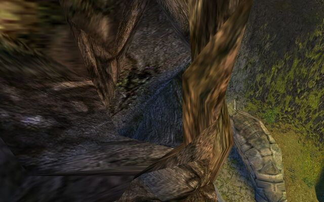 File:Tree hollow?.jpg