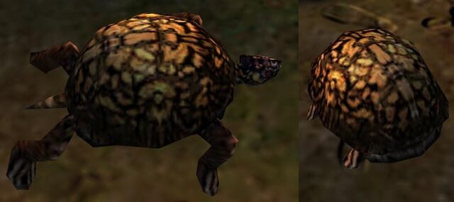 File:Ambient Turtle.jpg