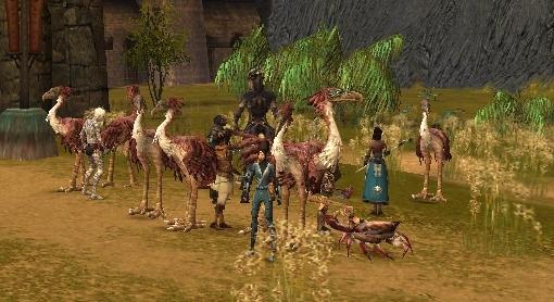 File:Moa herd.jpg