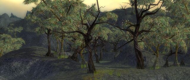 File:Forest of the Wailing Lord1.JPG