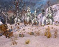 Frozen Forest 1000x800
