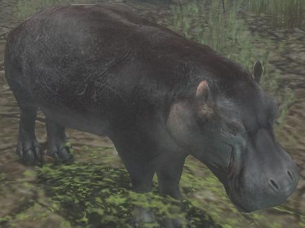 File:Pygmy Hippopotamus.jpg