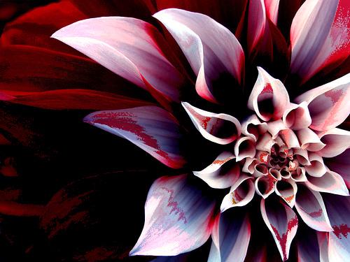 File:Bloody Lotus.jpg