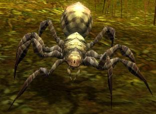 File:Moss Spider.jpg
