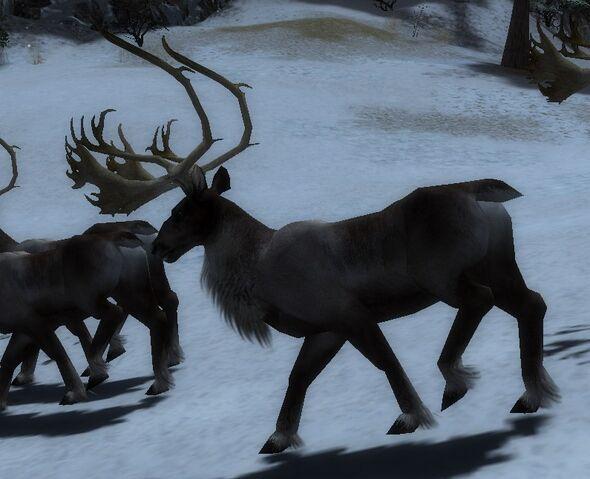 File:ReindeerA.jpg