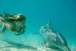 Emma Swims With Dolphin