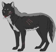 Darkstorm wolf